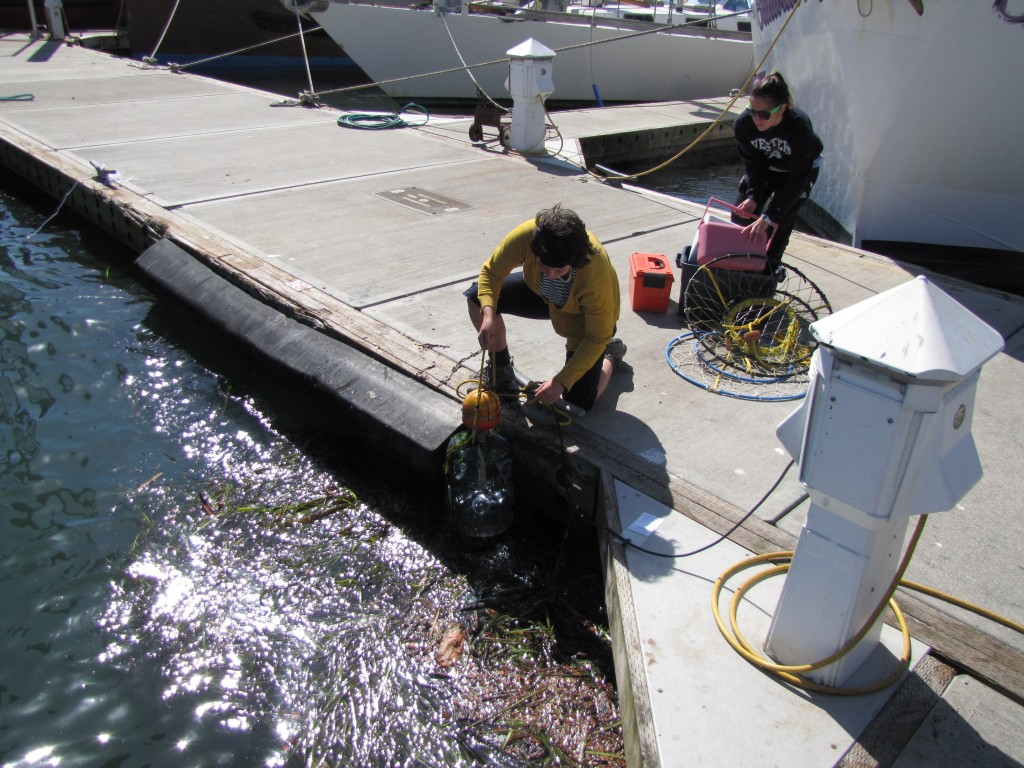 Interns collecting flora & fauna dockside at Charleston Marina.